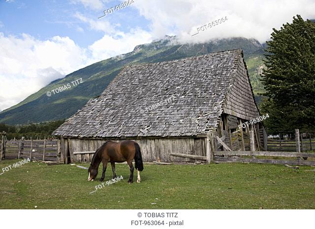 A horse in a field by a barn