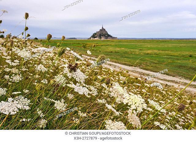 salt marsh in the Mont-Saint-Michel bay, Manche department, Normandy region, France, Europe