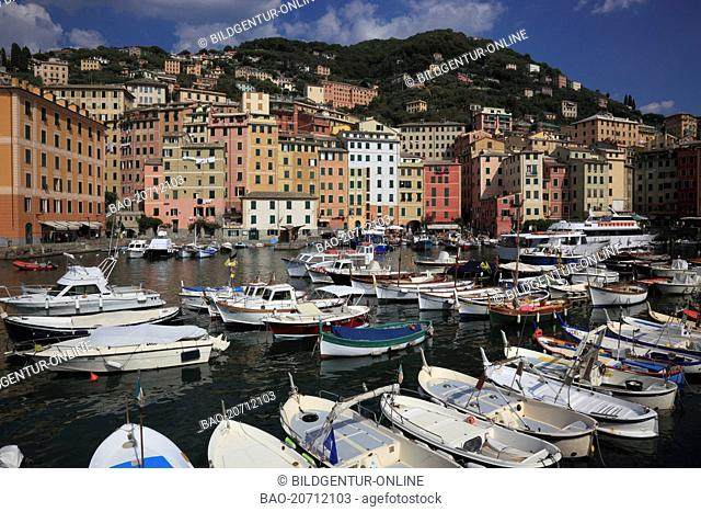 city of Camogli near Genoa, at Golfo Paradiso, Riviere di Levante, Liguria, Italy