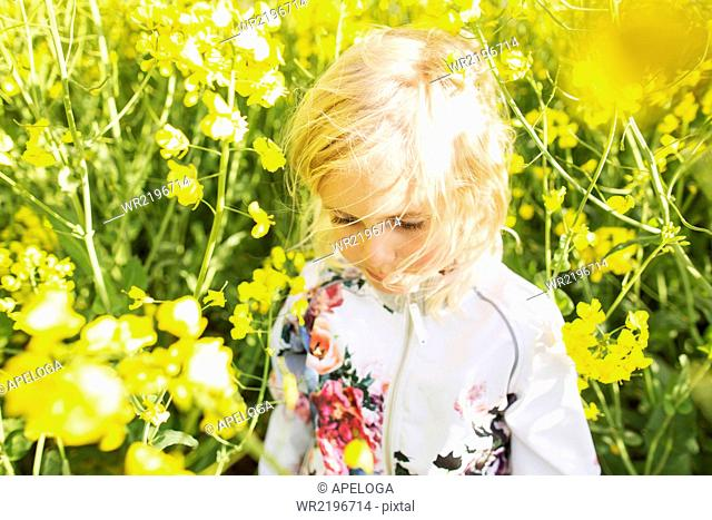 Cute girl at rapeseed field on sunny day