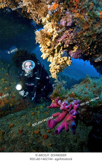 Pink tube sponge and diver, Baia Sardinia, Italy, Europe, Mediterranean, Haliclona mediterranea