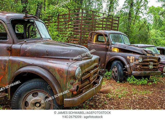 Old rusted abandoned cars and trucks in Crawfordville Florida
