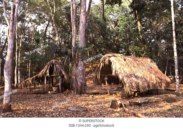 Huts in a forest, Dos Pilas Mayan, Guatemala
