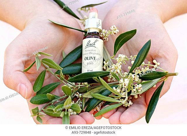 Olive. Bach's remedy