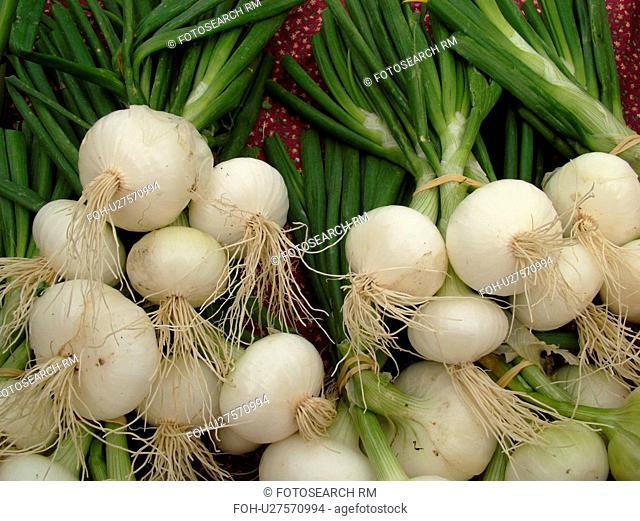 Montpelier, VT, Vermont, Farmer's Market, Sweet Spanish Onions