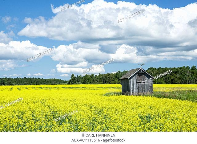 Shed in farm field, Providence Bay, Manitoulin Island, Ontario, Canada
