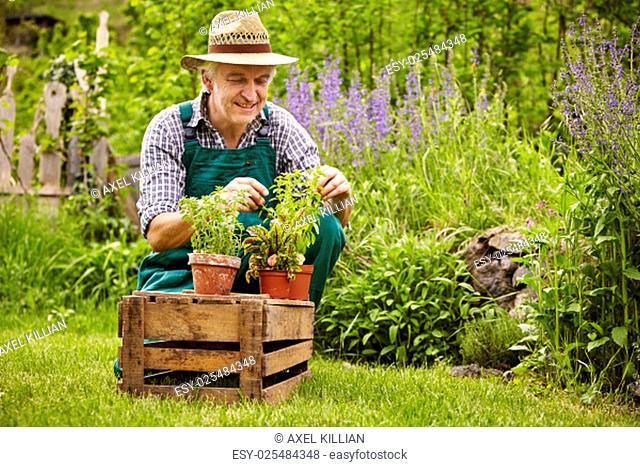 gardener with seedlings in the garden