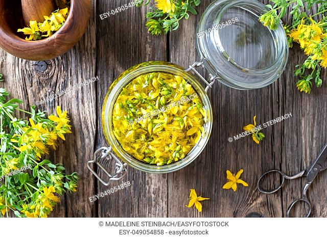 St. John's wort flowers macerating in olive oil in a glass jar, top view
