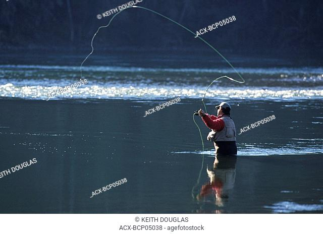 Flyfisherman casting dry fly for steelhead, Bulkley river,Smithers, British Columbia, Canada