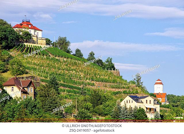 View of a vineyard in Radebeul near Dresden, Saxony, Germany