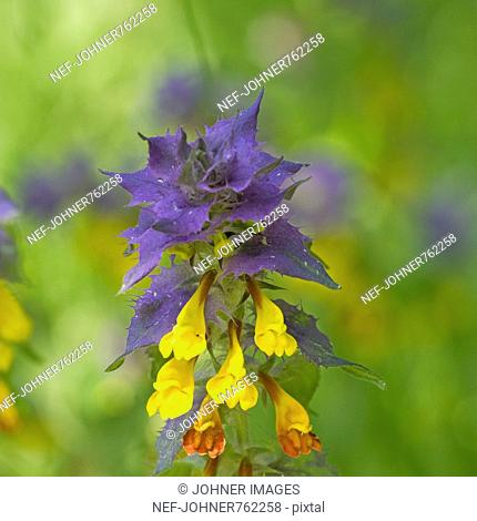 A purple and yellow flower