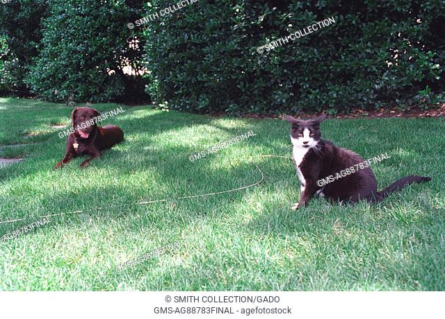 Buddy the Dog and Socks the Cat, First Family's pets, sitting on the south lawn of the White House, June 16, 1998. Image courtesy National Archives