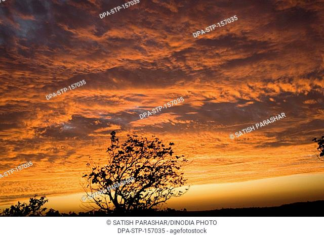 Burning red sky at time of sunrise at Chikhaldara ; district Amravati ; Maharashtra ; India