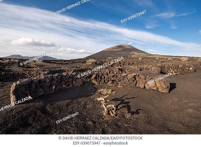 Volcanic vineyard in La Geria, Lanzarote , Canary islands, Spain