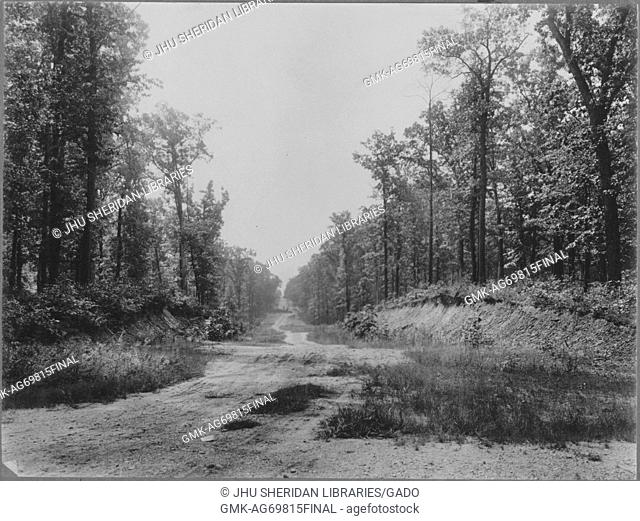 Path of dirt covered in wild vegetation and trees, trees on slightly leveled surface, Baltimore, Maryland, 1910. This image is from a series documenting the...
