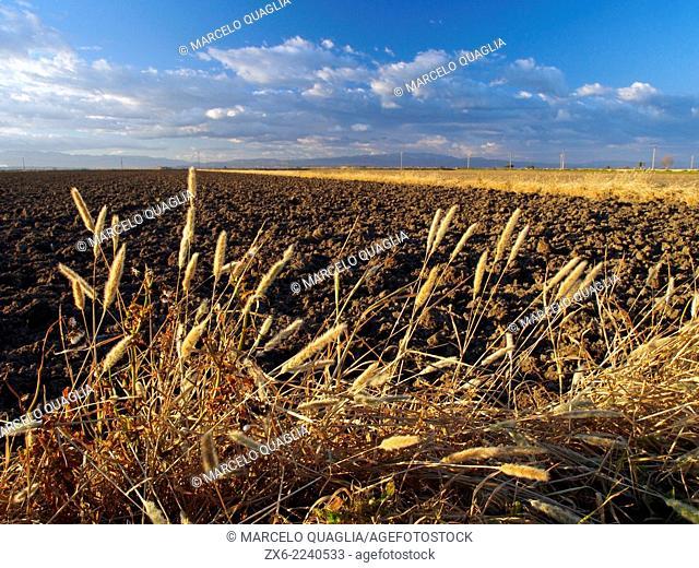 Late Winter ploughed rice fields. Ebro River Delta Natural Park, Tarragona province, Catalonia, Spain