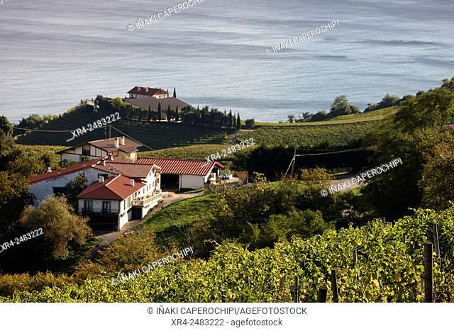 Txakoli vineyards, Getaria, Gipuzkoa, Basque Country, Spain