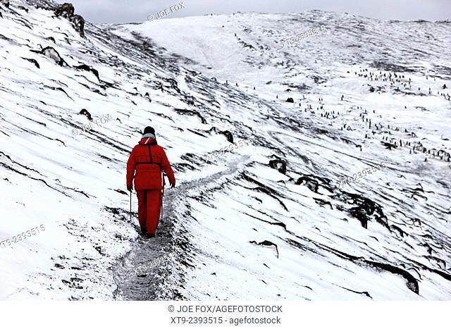 two tourists walking along ridge at hannah point penguin colony Antarctica