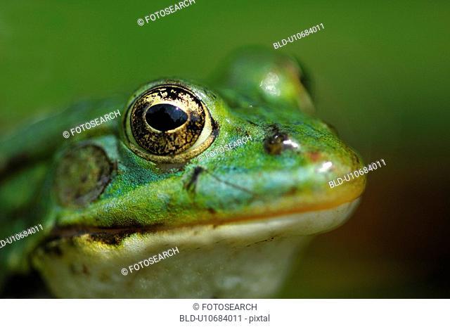 details, animal, detail, close-up, animals, amphibian