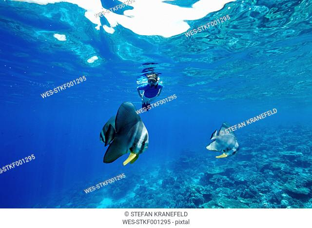 Maldives, fish and woman snorkeling in the Indian Ocean