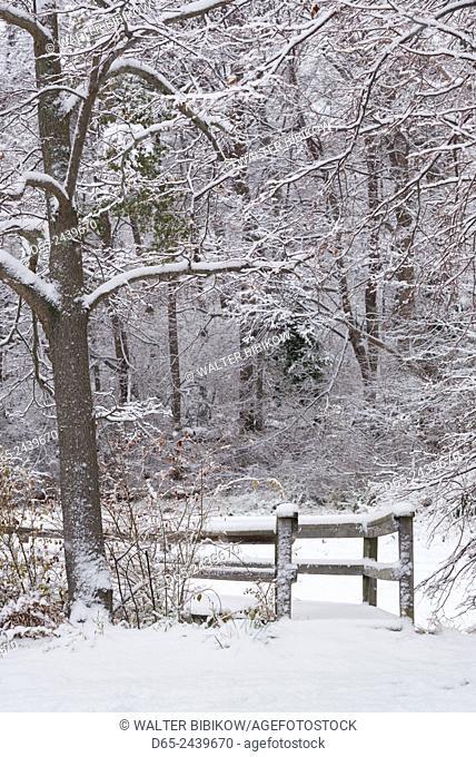 USA, Massachusetts, Cape Ann, Gloucester, early snowfall
