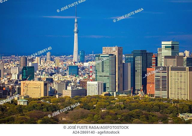 Japan, Tokyo City, Imperial Palace East Gardens, Otemachi Skyline, and Skytree Tower