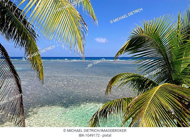 View through palm trees of the shallow water of the South Water Caye coral reef, Caribbean Sea, Belize, Central America