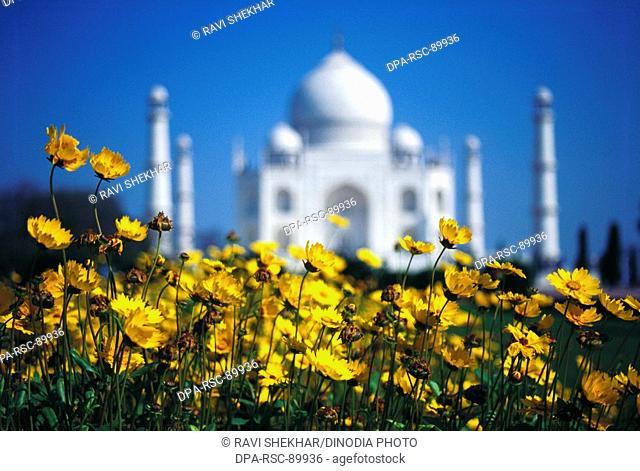 Yellow flowers at Taj mahal Seventh Wonder of The World , Agra , Uttar Pradesh , India