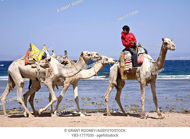 Boy with Camels, Red Sea, Egypt