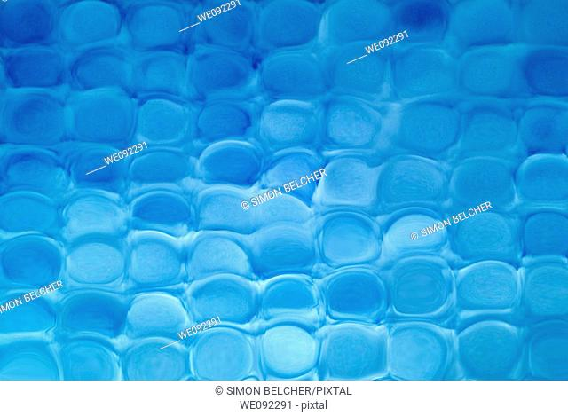 Ice Blue Cubic Pattern