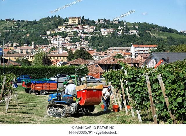 Italy, panorama of vineyards of Piedmont Langhe-Roero and Monferrato on the World Heritage List UNESCO. View of Canelli in time of harvest Italy, Piedmont