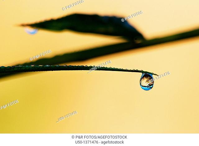 Raindrop on leaf, Rio Branco, Acre, Brazil, 2010