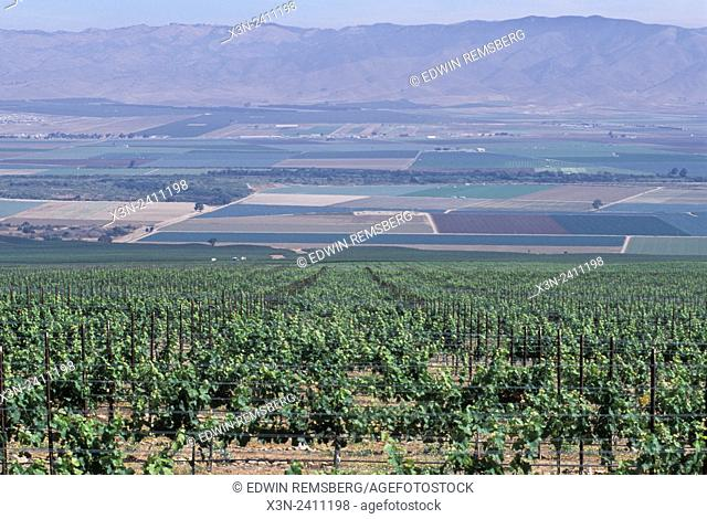 CALIFORNIA - View of Salinas Valley from vinyards that line the hillsides