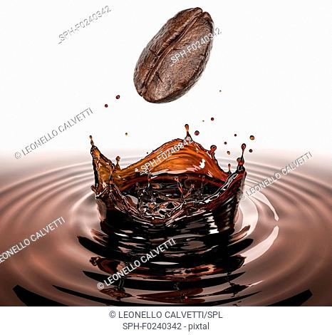 Coffee bean falling splashing in a pool of coffee with crown splash. Isolated on white background