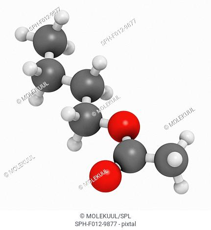 Butyl acetate molecule. Used as synthetic fruit flavouring and as organic solvent. Atoms are represented as spheres with conventional colour coding: hydrogen...