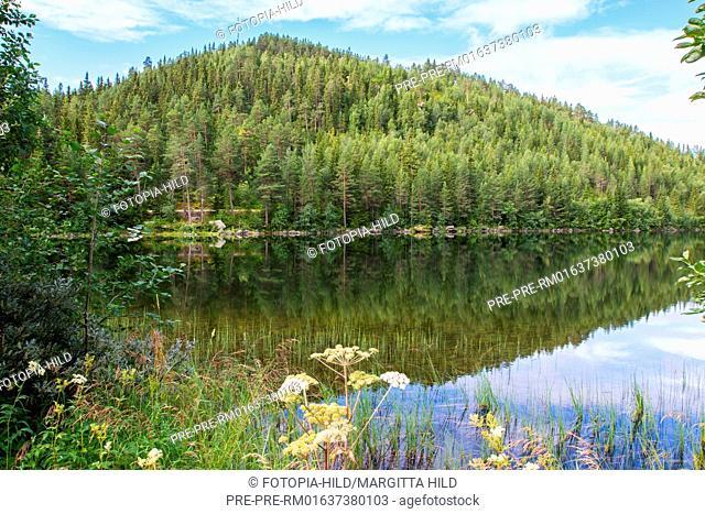 Landscape near Fagernes, Nord-Aurdal kommune, Oppland, Norway / Landschaft bei Fagernes, Nord-Aurdal Kommune, Oppland, Norwegen