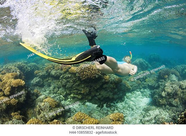 10855832, Snorkeling, Bikini Atoll, Marshall Islan