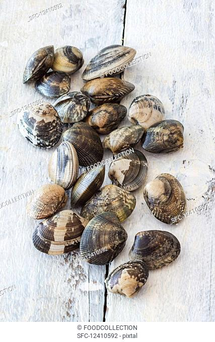 Venus clams on a wooden surface