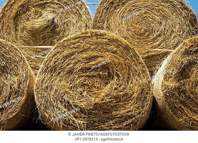 Close-up of round straw bales stacked in the field. Province of Burgos. Castilla y León. Spain