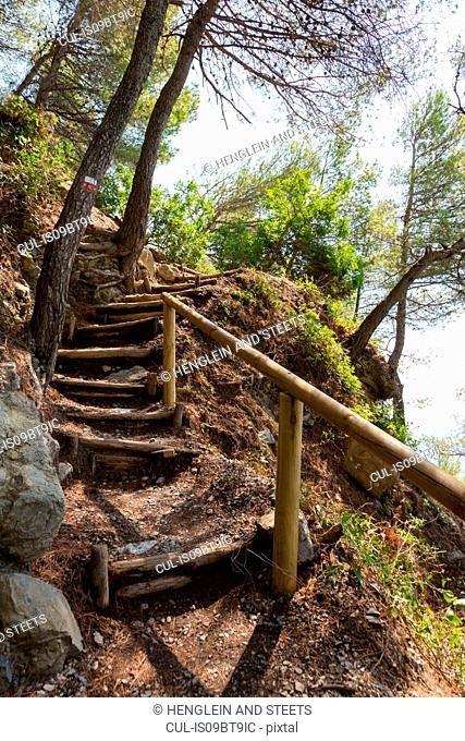 Steep wooden stairway in hillside forest, Lerici, Liguria, Italy