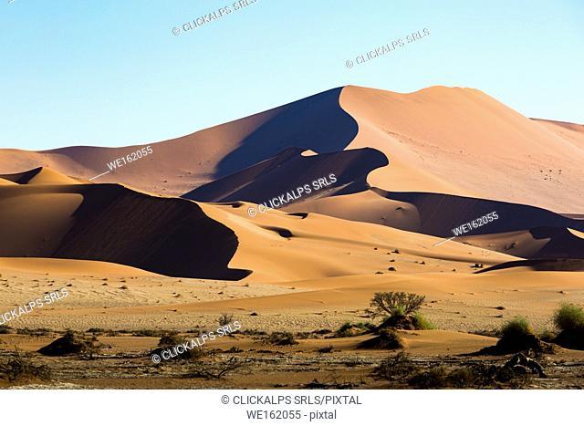 Sossusvlei, Namib desert, sand dunes during the golden hour. Namibia, Africa