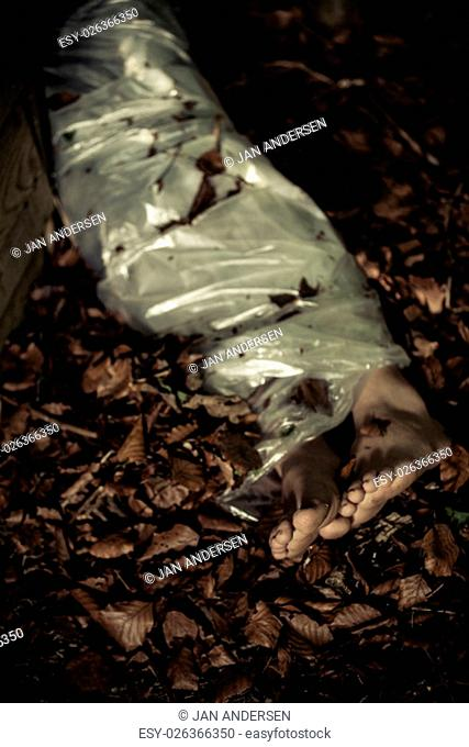 Legs of a discarded corpse in leafy detritus in woodland wrapped in a sheet conceptual of a victim and crime