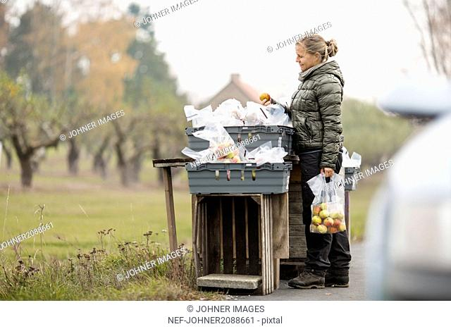 Mid adult woman picking apples