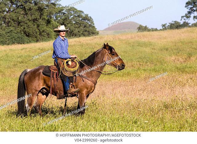 Single wrangler (cowboy) on horse, California, USA