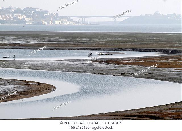 Natural marshes of Rio Eo, in Ribadeo i, Lugo. In the background the bridge of Los Santos, linking Asturias d, Galicia i