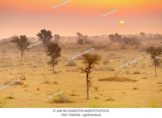 Sunrise in Thar desert near Jaisalmer, Rajasthan, India