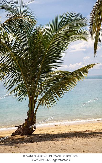 Palm tree on the beach of Ko Ngai, a tropical island in the Andaman sea around Thailand