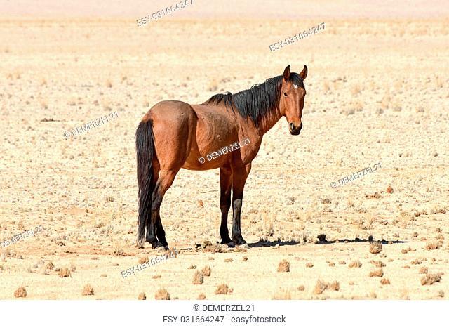 Horses in the desert landscape of Namibia