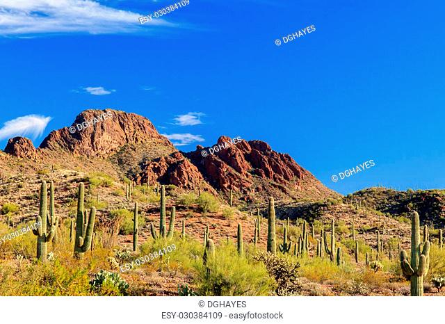 Giant Saguaro cactus dot the landscape leading to the rugged, rocky outcrop of Vulture Peak, Arizona