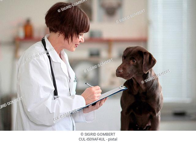 Female veterinarian making notes of examination on clipboard